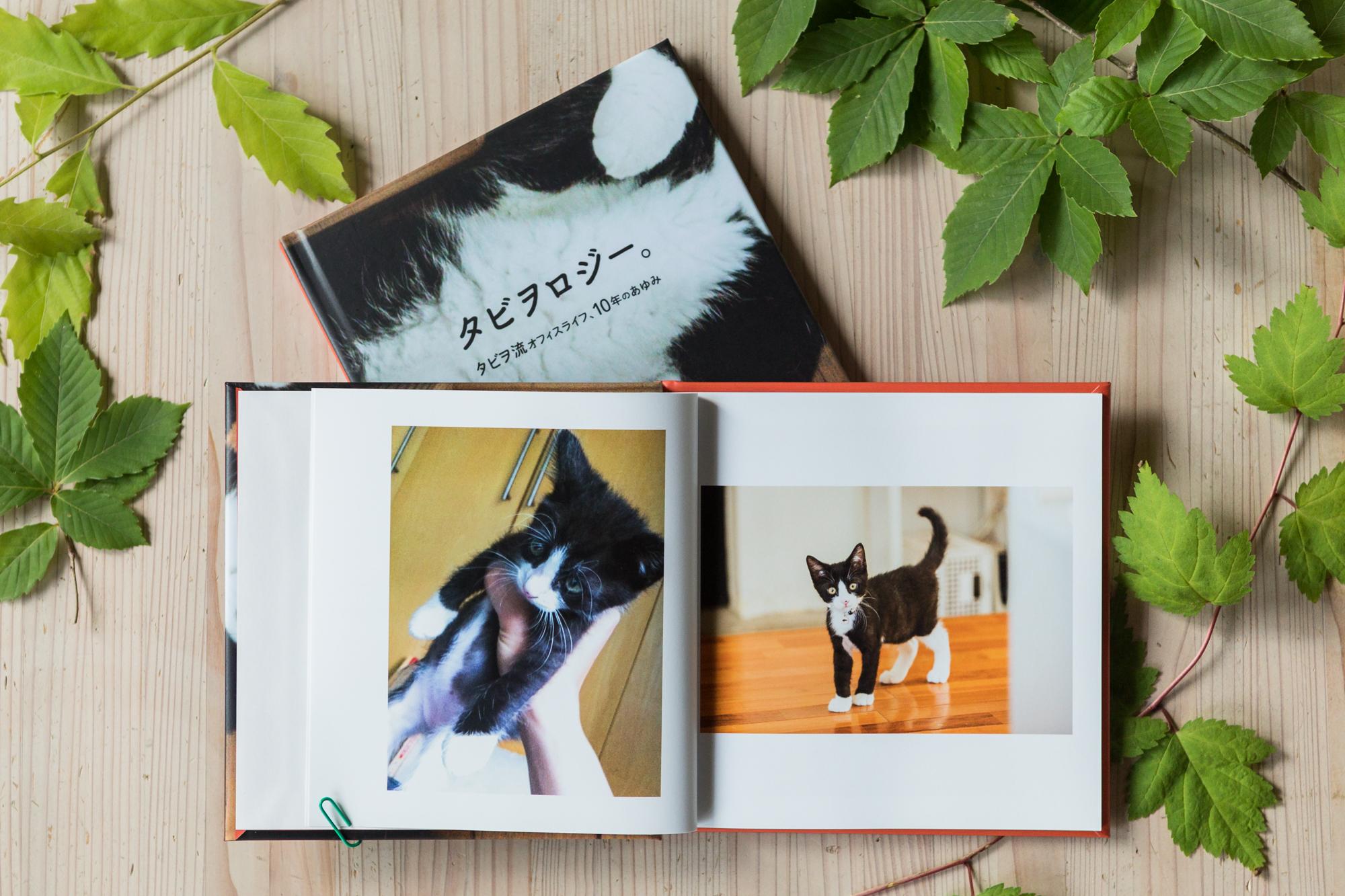 社猫、タビヲの写真集解禁!オンライン・チャリティショップ「モネリコ」で販売します